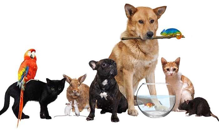 خرید تجهیزات و خدمات حیوانات خانگی