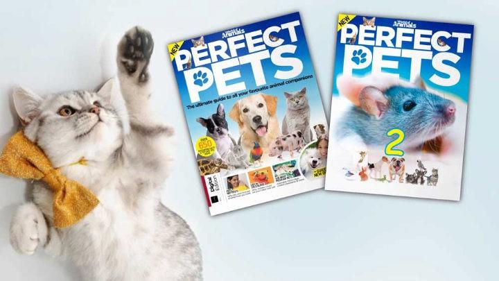 مجله Perfect Pets